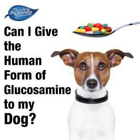 Can I give the human form of glucosamine to my dog?