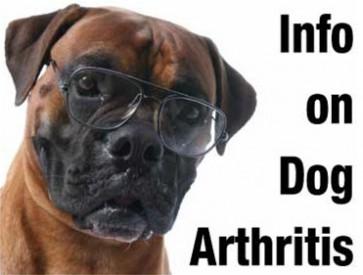 Information on dog arthritis