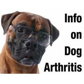 Information on dog arthritis
