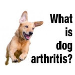 What is Dog Arthritis?